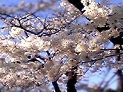 20060423yakushido4jp_1