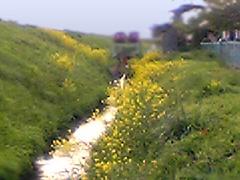 20060512fukumurojp