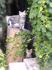 20060919cats