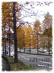20071111kitanejp