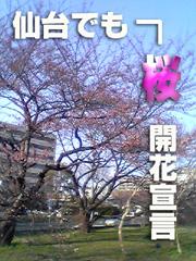 20070406sakura1jp