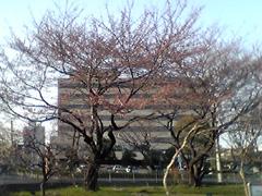 20070406sakura2jp