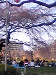 20070406sakura4jp