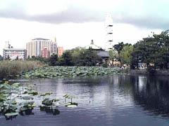 20050127shinobazunoikeJP