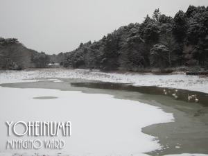 20120128_yoheinuma