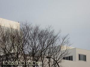 20120307_kokubuncho