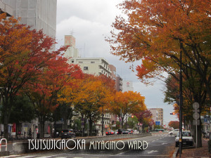 20121118_autumn_leaves2