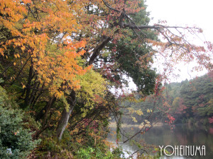 20121118_autumn_leaves3