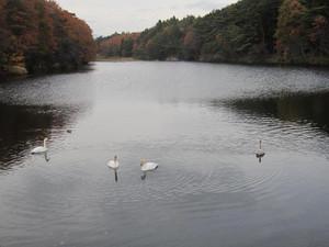 20121128_yoheinuma